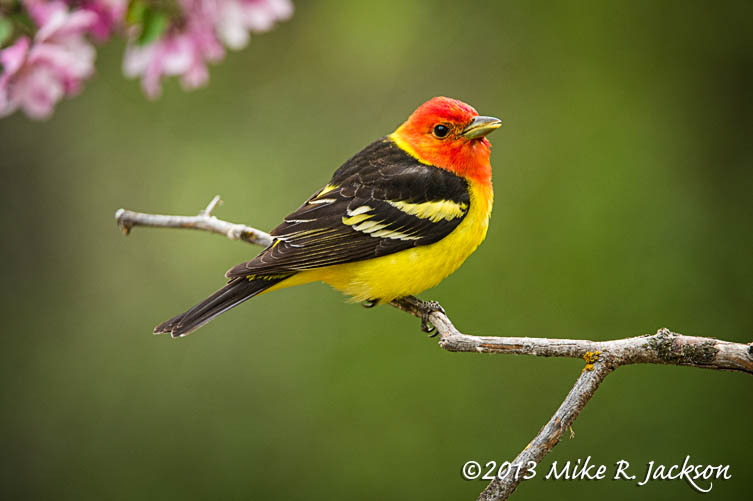 Tanager Flowers 4 May29