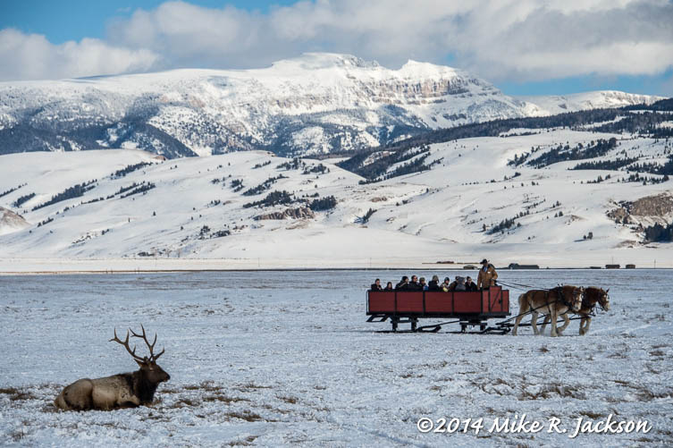 Web Elk Refuge Sleigh Ride Jan31