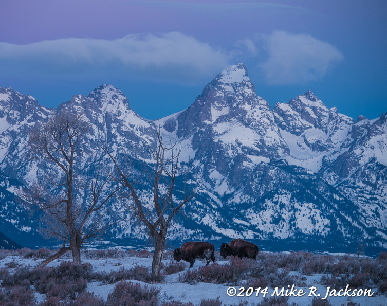 Web Alpenglow and Bison Jan26