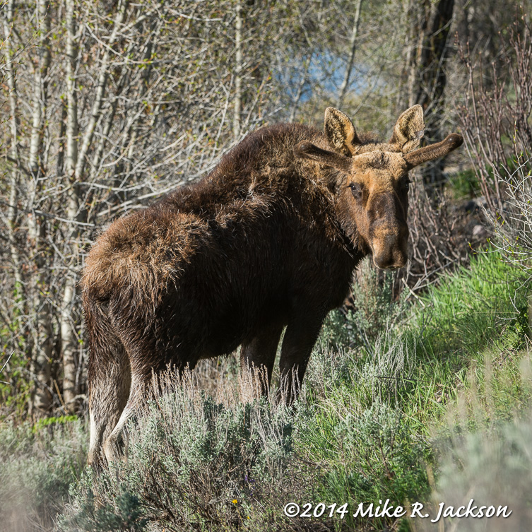 May2014 Daily Journal For Gtnp Amp Jh Best Of The Tetons