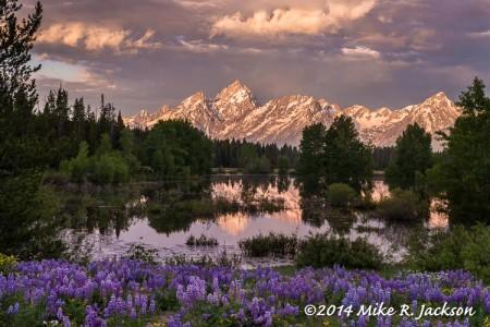 June Daily Updates in Grand Teton National...