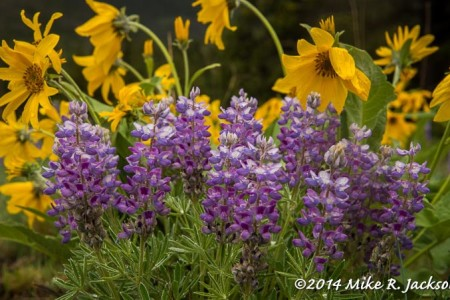 Wildflowers: Photography Tips, Suggestions...