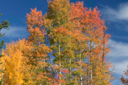 Polarizing Filters for Fall Foliage