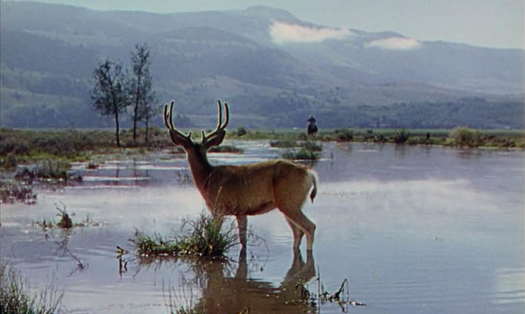Deer Watching Shane Approach