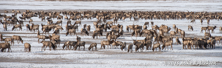 Mass of Elk