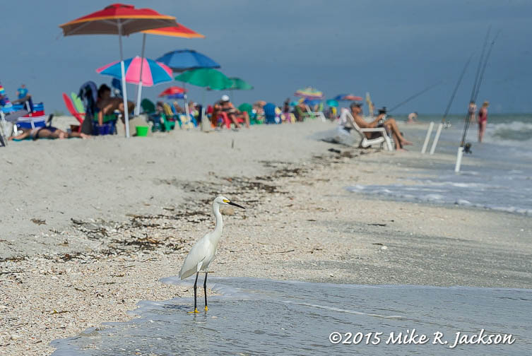 Beach Dwellers
