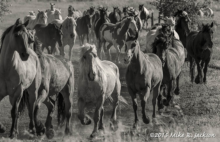 Horses Going to Pasture