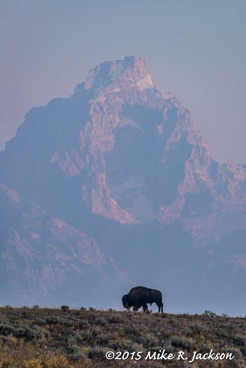 Ridge Line Bison