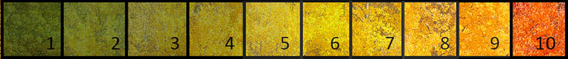 Foliage Scale 2015