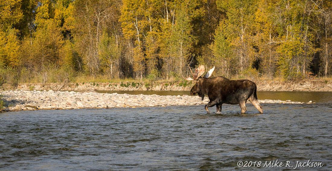 Shoshone River Crossing