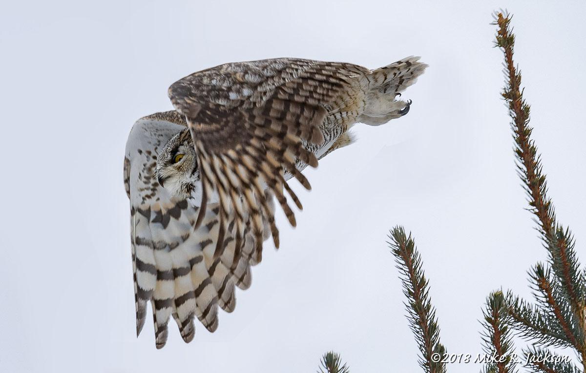 GHO in Flight