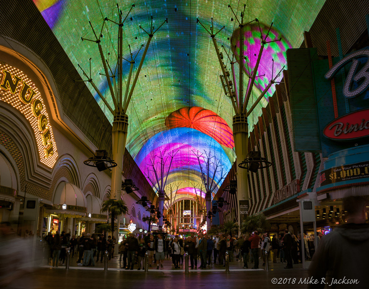 Freemont Canopy at Night