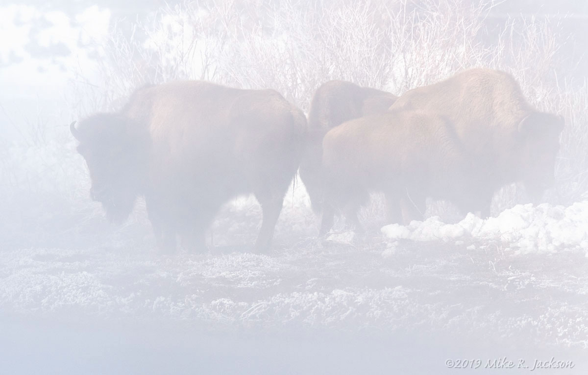 Steam and Bison
