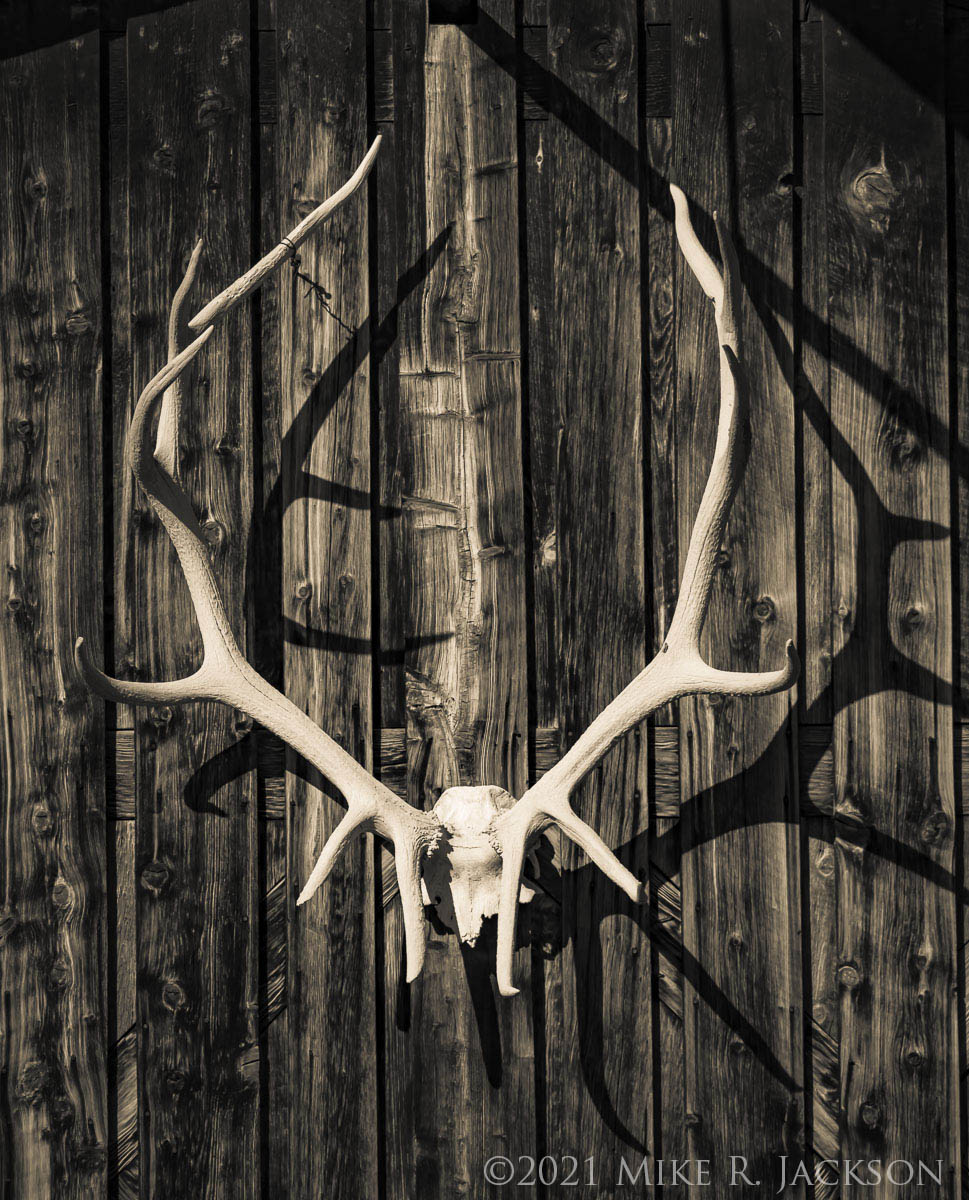 Antlers and Skull